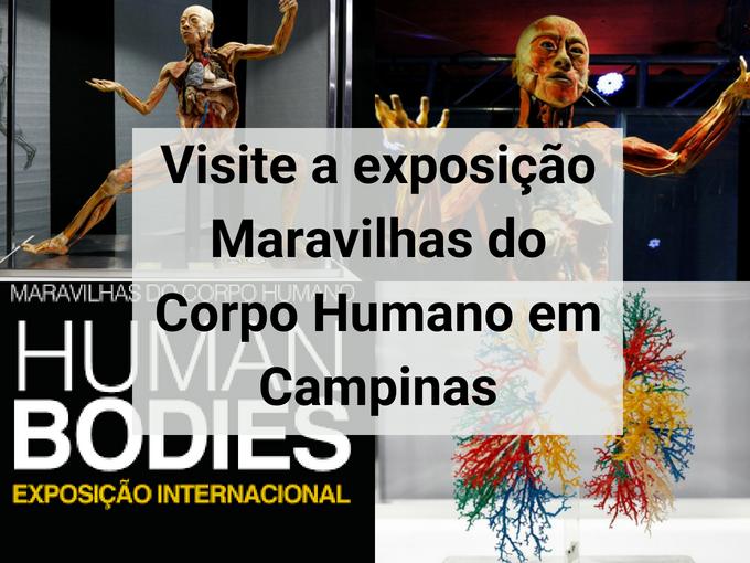 Exposição Maravilhas do Corpo Humano em Campinas